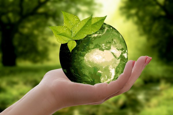 Picture of a hand holding an herbal green globe